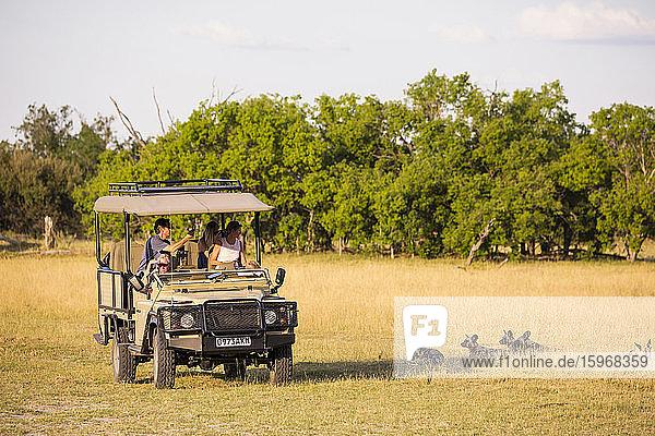 Ein Safari-Jeep  Passagiere beobachten wilde Hunde  Lycaon pictus