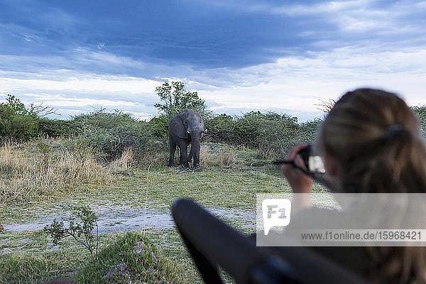 Ein Teenager-Mädchen fotografiert mit einer Kamera einen reifen Elefanten mit sich nähernden Stoßzähnen