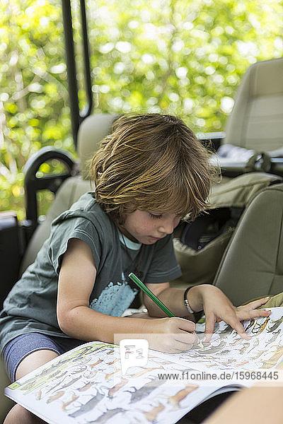 Zeichnung eines fünfjährigen Jungen  Moremi Reserve  Botswana