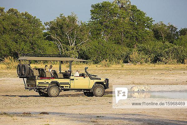 Ein Safarifahrzeug und Passagiere ganz in der Nähe eines Löwenpaares  Panthera Leo  das an einer Wasserstelle trinkt.