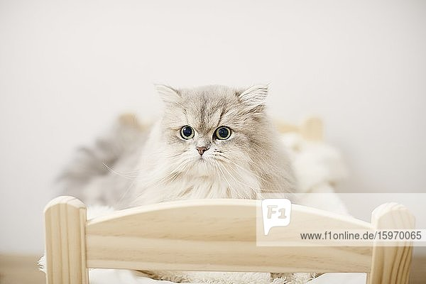 Katzenportrait zu Hause