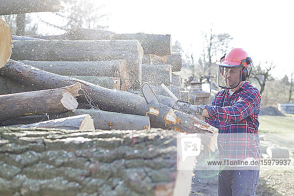 Lumberjack cutting log with chainsaw during sunny day
