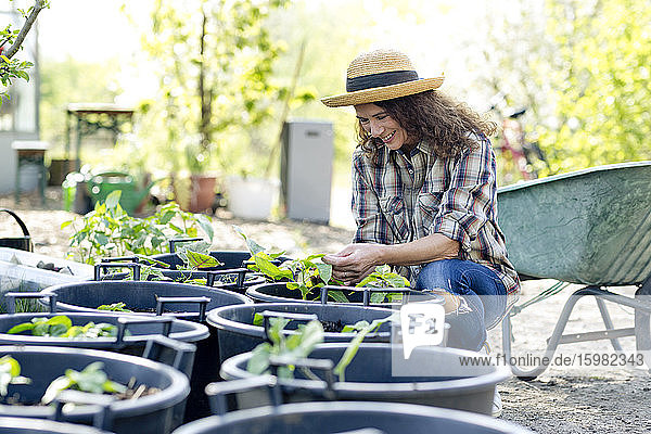 Smiling female farmer looking at plants while crouching at community garden