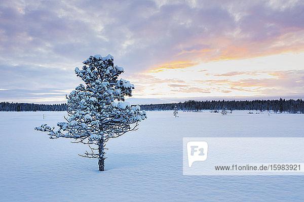 Winter landscape with tree  Hetta  Enontekioe  Finland