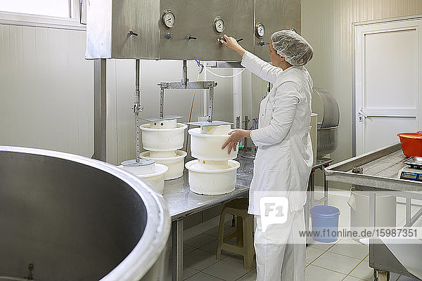 Cheese factory  female worker with cheese molds and press Cheese factory, female worker with cheese molds and press