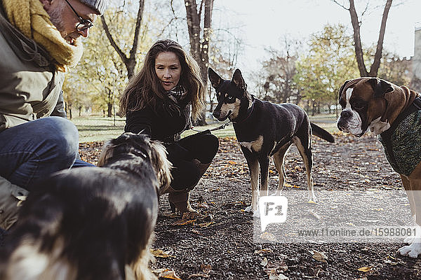 Mann und Frau kauern mit Hunden im Park