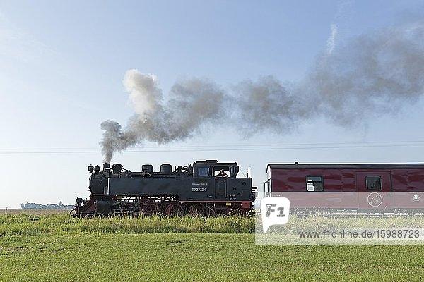 Steam locomotive Molli  Wittenbeck  Mecklenburg-Vorpommern  Germany  Europe