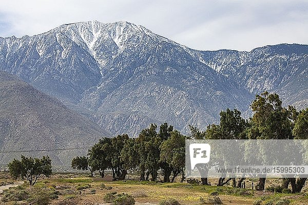 Mount San Jacinto is the highest peak in the San Jacinto Mountains. Palm Springs  Riverside County  California  USA.