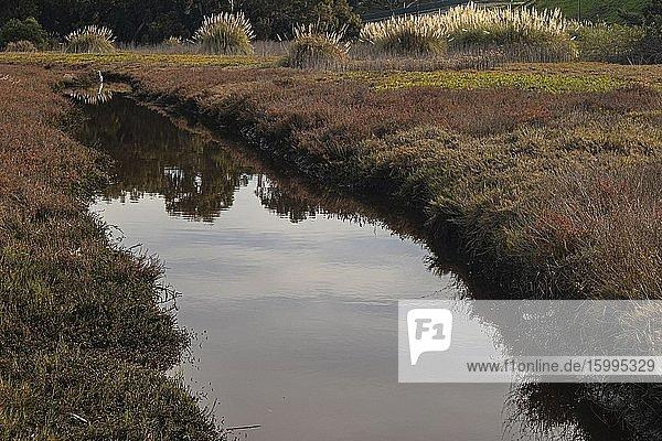 Egret in Ballona Wetlands  Playa Del Rey  Los Angeles  CValifornia  USA.