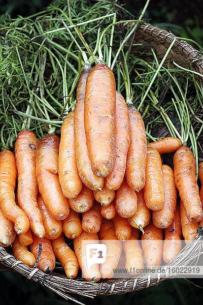 Korb mit frischen Möhren zum Verkauf auf dem Markt
