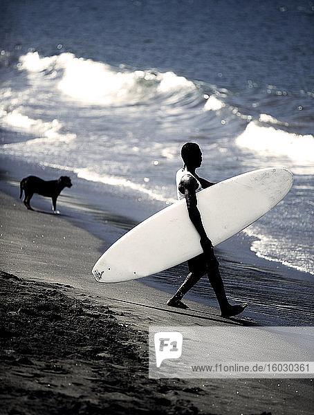 Seitenansicht eines Mannes am Sandstrand  der ein Surfbrett in die Wellen des Ozeans trägt  im Hintergrund steht ein Hund.