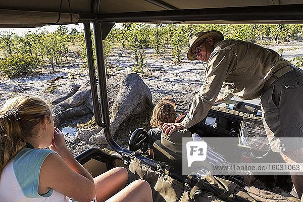 Ein Jeep mit zwei Kindern und einem Reiseleiter  der sich hinauslehnt und den Kadaver eines toten Elefanten betrachtet.
