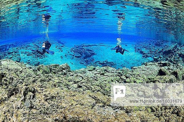 Zwei Taucher in der Silfra-Lagune  Thingvellir Nationalpark  Sudurnes  Island  Europa