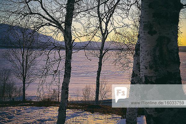 Blick an Bäumen vorbei über den zugefrorenen See bei Sonnenuntergang  Vasterbottens Lan  Schweden.