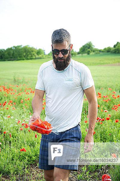 Bärtiger Mann mit Sonnenbrille beim Pflücken von Kornblumen und Mohn auf einer Wiese.