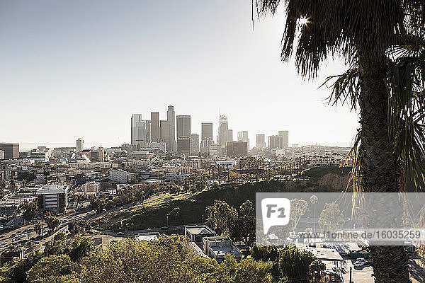 Sunny cityscape  Los Angeles  California  USA