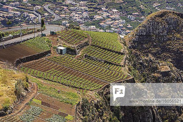 Portugal  Camara de Lobos  Agricultural fields at edge of cliff