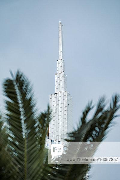 Georgia  Adjara  Batumi  Palm tree against BatumiTechnological University Tower
