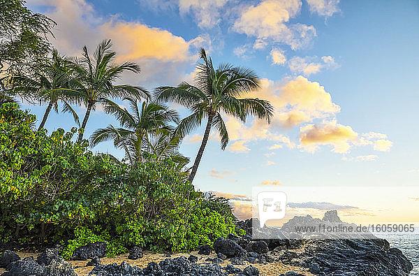 Coastline of Maui with rugged lava rock and palm trees at sunset; Kihei  Maui  Hawaii  United States of America