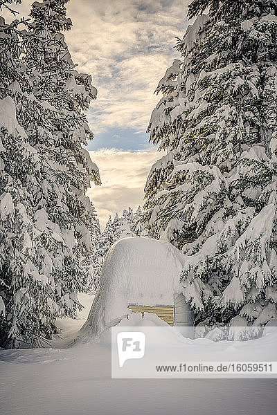 Deep snow covers an aluminum camp trailer tucked between tall spruce trees  Moose Pass  Kenai Peninsula  Southcentral Alaska  USA