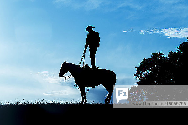 Silhouette of a cowboy standing on the back of a horse against a blue sky with cloud; Montana  United States of America