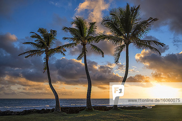 Palm trees at sunrise along the eastern shoreline of Oahu; Oahu  Hawaii  United States of America