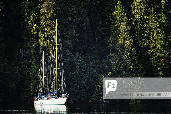 Sailboat in the Great Bear Rainforest at sunrise; Hartley Bay  British Columbia  Canada