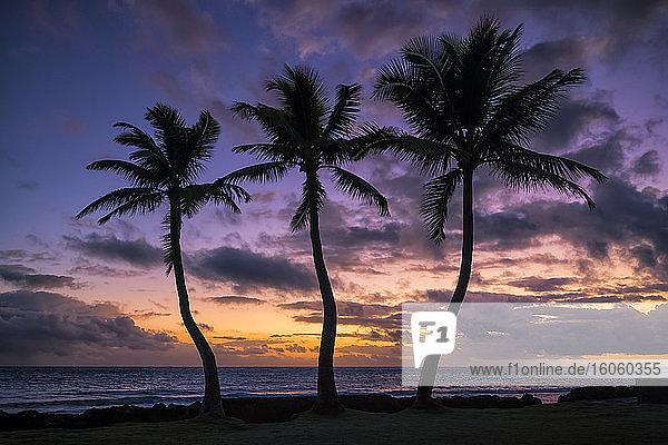 Sonnenaufgang über dem Ozean mit drei Palmen im Vordergrund; Waikiki  Oahu  Hawaii  Vereinigte Staaten von Amerika