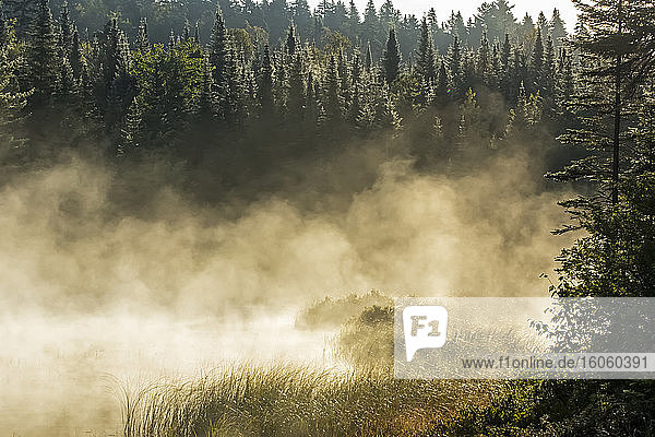 Marshland and mist at dawn  La Mauricie National Park; Quebec  Canada