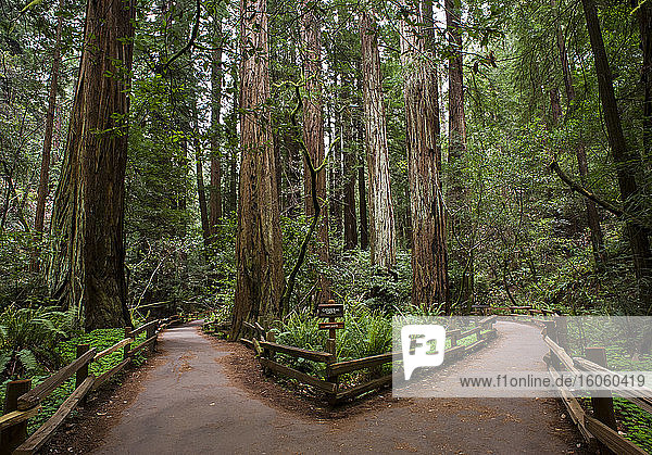 Muir Woods National Monument  Mount Tamalpais; California  United States of America
