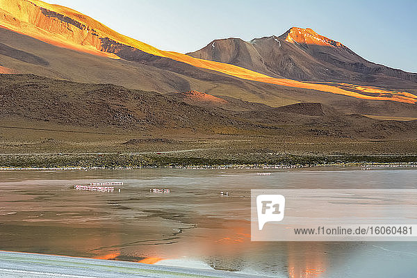 The sun is rising over a Bolivian laguna illuminating the mountain in the background in red. Flamingos are still asleep on the surface of the water; Potosi  Sur Lupiz  Bolivia