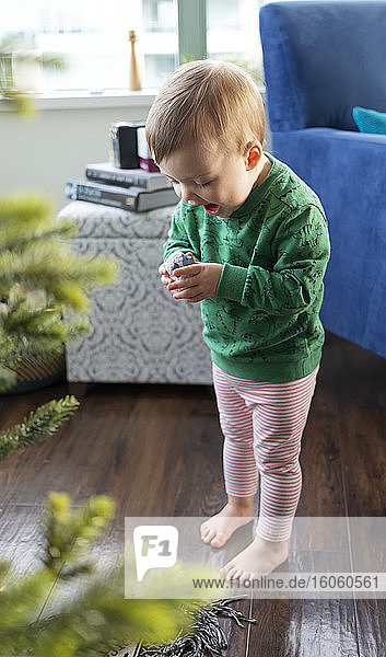 A toddler girl discovers a piece of a nativity set under the Christmas tree; Surrey  British Columbia  Canada