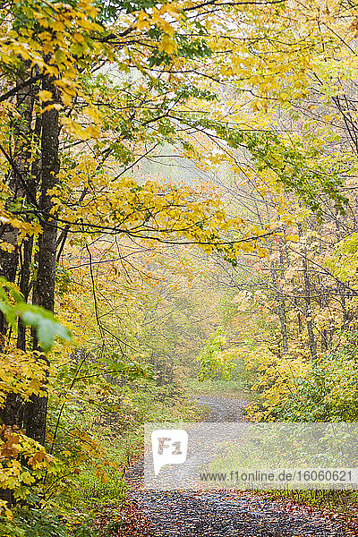 A gravel trail winding through a misty forest in autumn colours  near Grand Portage; Minnesota  United States of America