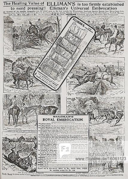Werbung für Elliman's Universal Embrocation in einer 1907 erschienenen Ausgabe von The Graphic  einer wöchentlich erscheinenden illustrierten Zeitung  die von 1869 bis 1932 in London erschien.