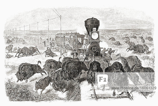 "Shooting buffalo on the Kansas-Pacific Railroad line. After a work by an unidentified artist which appeared in the June 3  1871 edition of Frank Leslie's illustrated newspaper. The mass slaughter of buffalo in the USA reduced the wild herds from tens of millions to near extinction. This picture reflects the advertising of railroad companies that a passenger could ""hunt by rail."