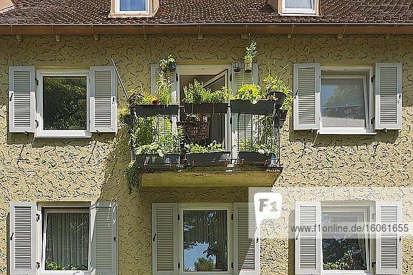 Altes Reihenhaus mit begrüntem Balkon  50er Jahre  München  Oberbayern  Bayern  Deutschland  Europa