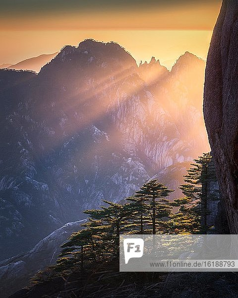 Kiefernwald vor Bergsilhouette  Sonnenuntergang im Huangshan Gebirge  Provinz Anhui  China  Asien