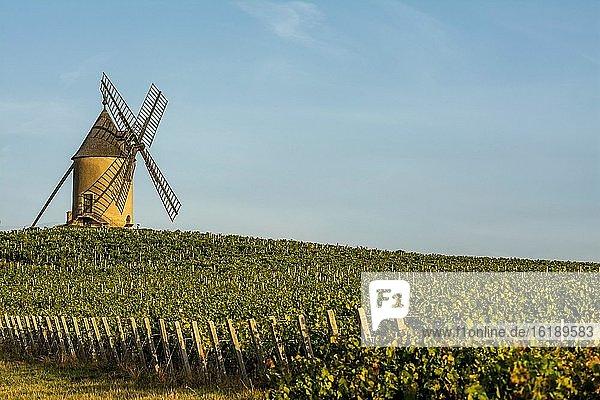 Windmühle am Beaujolais Weinberg  Romaneche Thorins  Departement Saone et Loire  Bourgogne-Franche-Comté  Frankreich  Europa