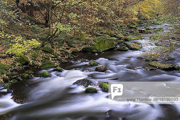 Herbst am Fluss Bode im Harz,  Laubfärbung,  Bodetal,  Thale,  Sachsen-Anhalt,  Deutschland,  Europa