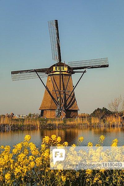 Windmühle  Kinderdijk  UNESCO Weltkulturerbe  Südholland  Niederlande  Europa