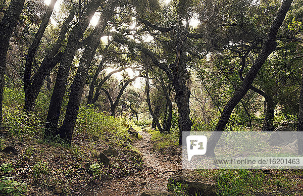 Blick entlang eines schmalen Fußweges in einem Wald.