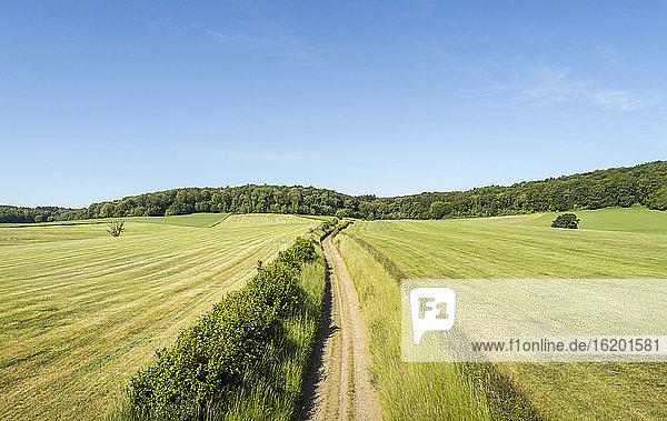 Landstraße durch Felder mit Wald in der Ferne bei Limburg  Niederlande.