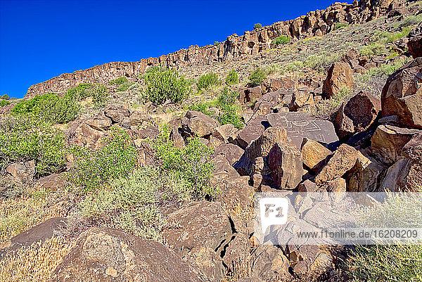 Petroglyphen bedeckte Felsbrocken an einem Hang im Upper Verde River Wildlife Area in Paulden  Arizona  Vereinigte Staaten von Amerika  Nordamerika