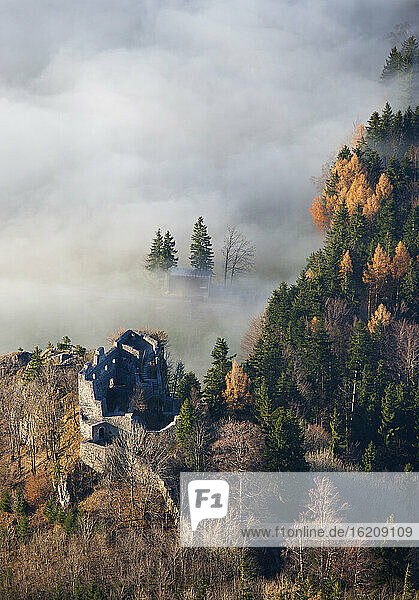 Austria  Salzkammergut  Castle ruin Wartenfels and trees covered with fog