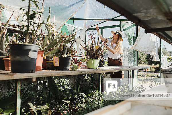 Female owner wearing hat planting on table in greenhouse