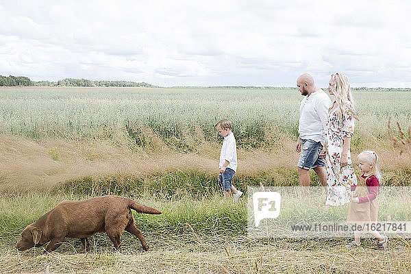 Family with Chocolate Labrador walking on oats field against sky