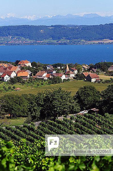 Schweiz  Waadt  Region Bonvillars am Neuenburgersee  Blick auf Weinberge  Häuser und auf den See