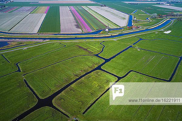 Europe  Nederlands tulips fields  Schermerhorn
