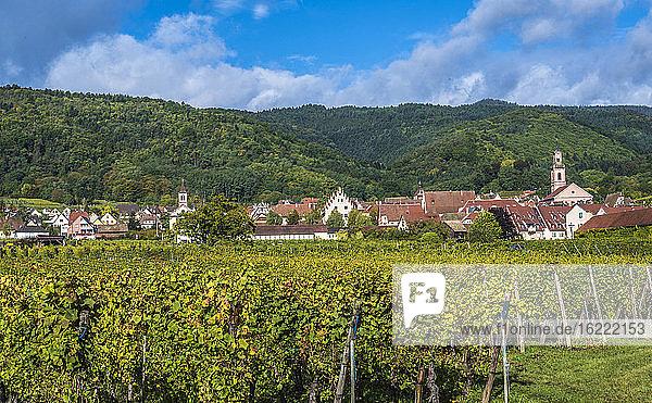 Frankreich  Elsass  Weinstraße  Weinberg und Dorf von Riquewihr (Plus Beau Village De France)