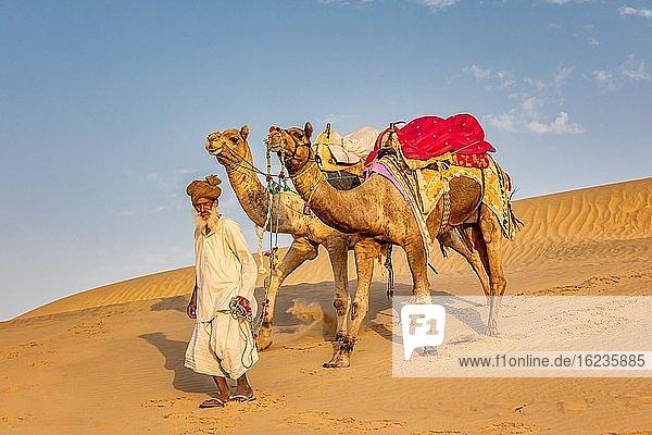 Alter Mann mit Kamelen  Wüste Thar  Rajasthan  Indien  Asien